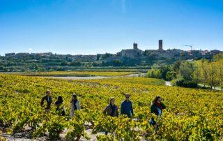 ruta del vino lleida